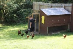 John at the Chicken Coop
