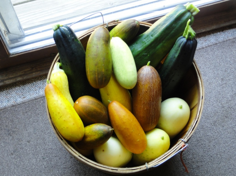 Heirloom Cucumbers