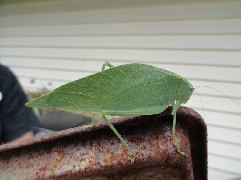 Cool-Leaf-Bug-2011
