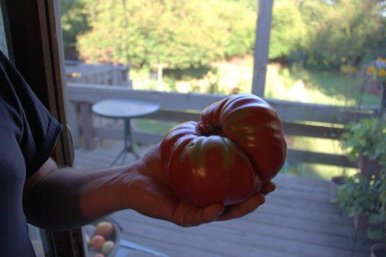 Giant-Heirloom-Tomatoe