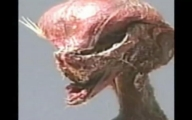 Chilean Alien