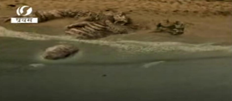 Giant Creature Being Uncovered In India